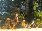 IMG_7832Woodpecker