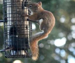 IMG_9331Squirrel