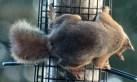 IMG_9341Squirrel
