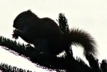 IMG_0825Squirrel