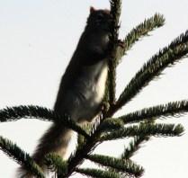 IMG_0832Squirrel