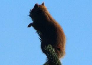 IMG_0845Squirrel