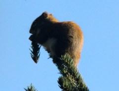 IMG_0849Squirrel