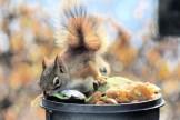 IMG_3338Squirrel