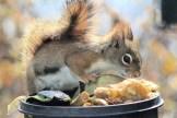IMG_3341Squirrel