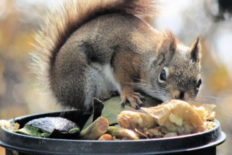 IMG_3346Squirrel