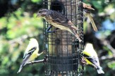 IMG_4476Finches