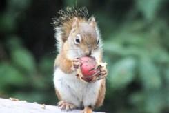 IMG_4194Squirrel