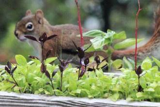 IMG_4197Squirrel