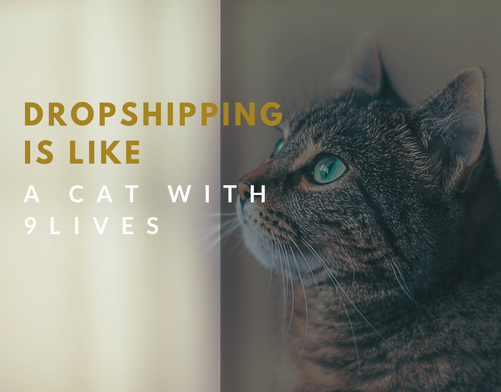 dropshipping is like a cat
