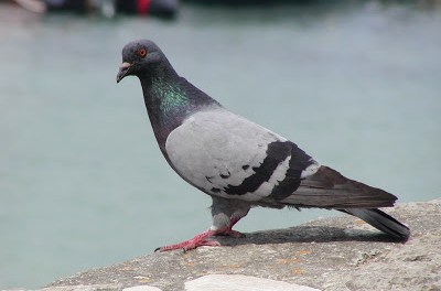 Expensive pigeon, homeless people employed and other new stories