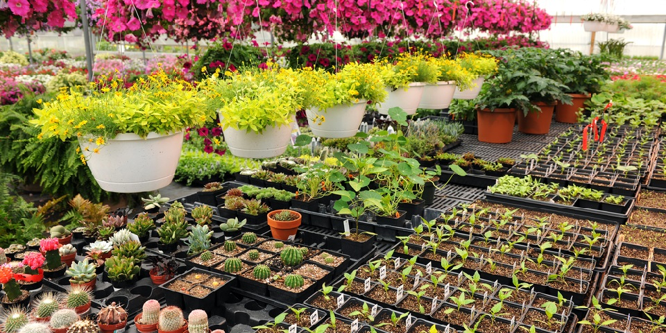 How To Start A Plant Nursery Business In Zimbabwe