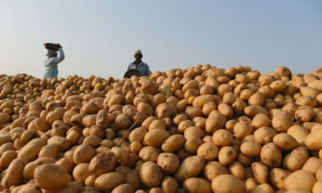 Important Things To Know About Potato Farming in Zimbabwe