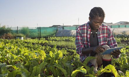 Agriculture Support Services In Zimbabwe