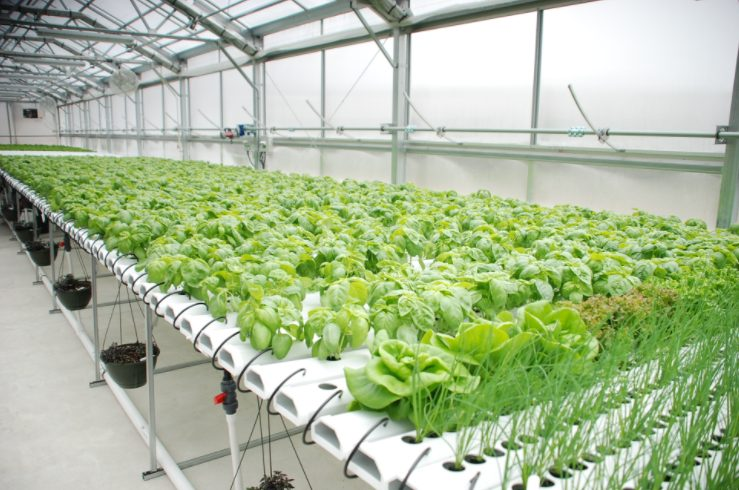 Huge Business Prospects In Hydroponics in Zimbabwe