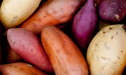 Starting A Sweet Potato Farming Business in Zimbabwe