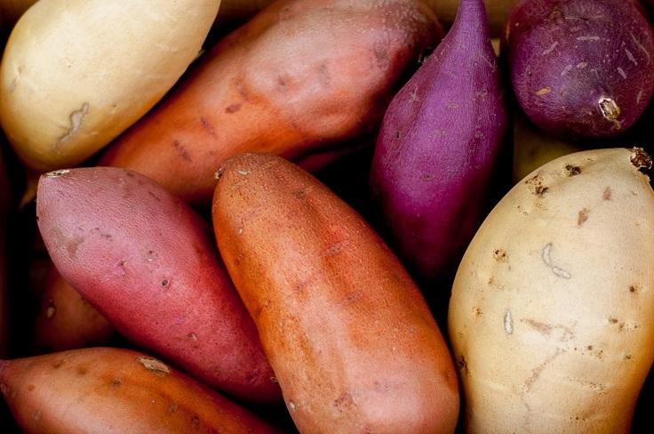 Starting A Sweet Potato Farming Business in Zimbabwe