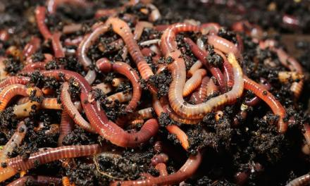 The Ever Increasing Popularity Of Vermicompost In Zimbabwe