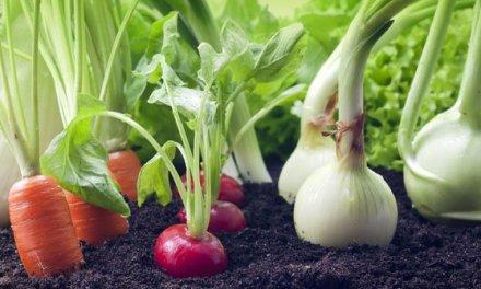 Organic Farming Business In Zimbabwe
