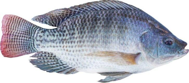 Starting Tilapia Fish Farming Business Plan (PDF
