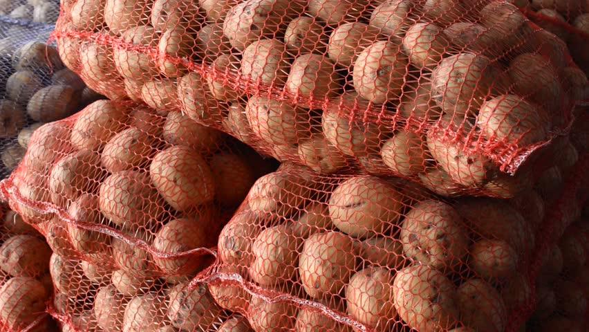 Potato farming business plan