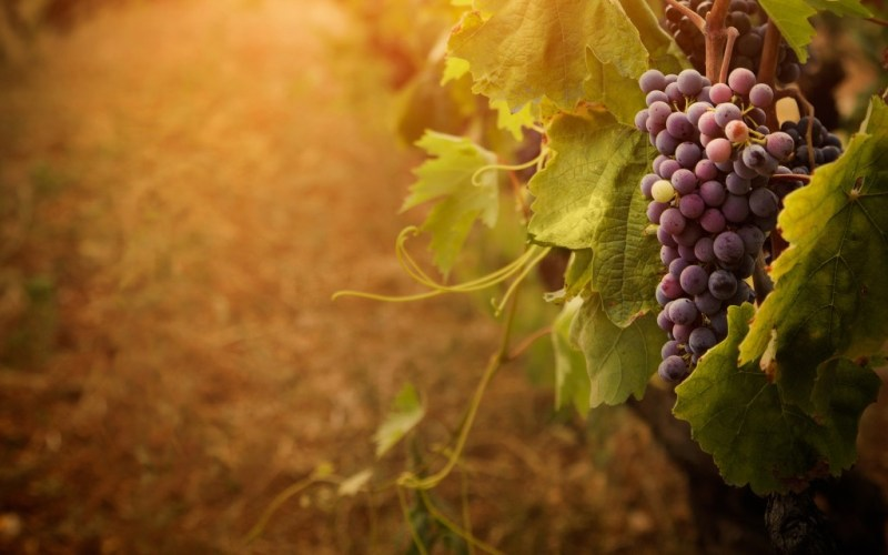 winegarden brings wine to you