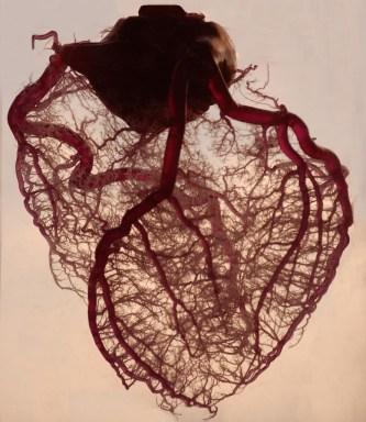 coração-aberto