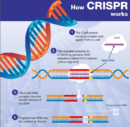 """A """"Magia"""" do CRISPR na Edição de Genes – HIHUB.TECH🌎Health Innova HUB"""