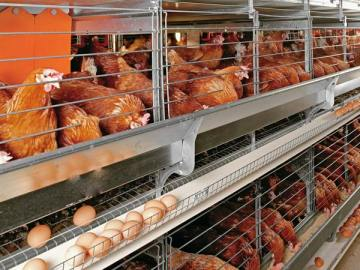 Poultry Farming In Nigeria - Poultry Layers Cages