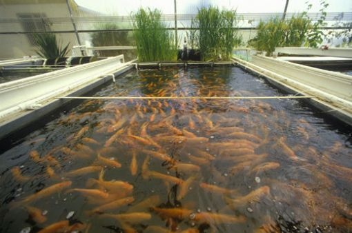 Aquaculture: How To Start A Profitable Fish Farming Business