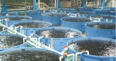 Aquaculture fish farming