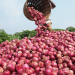 How To Start A Lucrative Onion Farming Business (Complete Guide)