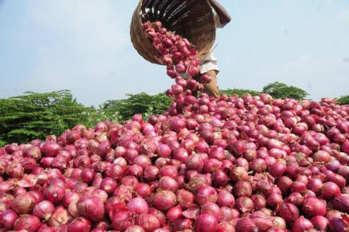 How To Start A Lucrative Onion Farming Business