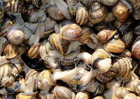 How To Start A Lucrative Snail Farming Business