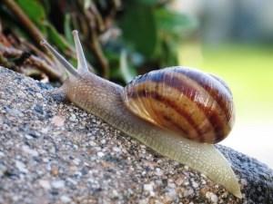 Snail Soil
