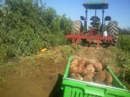 Potato Farm Machinery