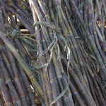 How To Start A Lucrative Sugarcane Farming Business In Nigeria: The Complete Guide