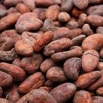 How To Start The Lucrative Export Of Cocoa Beans From Nigeria To International Buyers