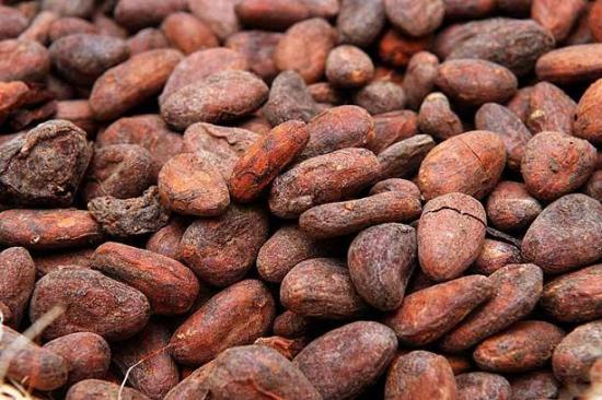 How To Start Exporting Cocoa Beans From Nigeria To International Buyers