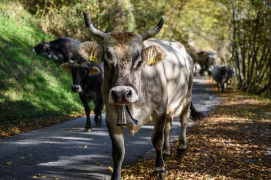How To Start Dairy Farming In Nigeria Or Africa: Complete Guide