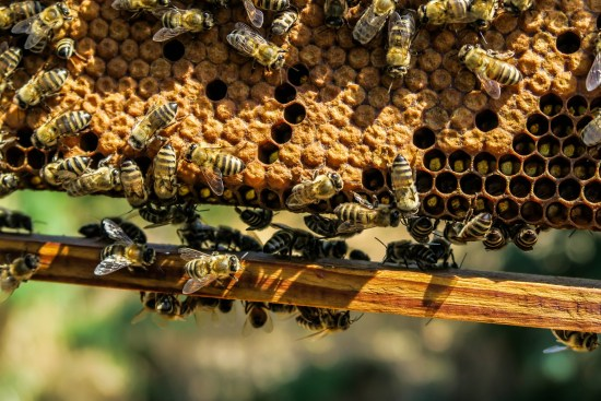 How To Start Bee Farming In Nigeria Or Africa: Guide & Business Plan