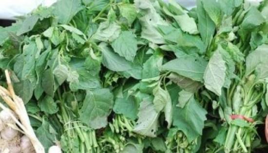 How To Start Ugwu Leaf Farming (Fluted Pumpkin) In Nigeria Or Africa