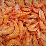 How To Start A Lucrative Frozen Shrimps And Prawns Production Business In Nigeria: The Complete Guide