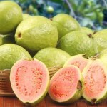 How To Start A Lucrative Guava Farming Business in Nigeria: The Complete Guide