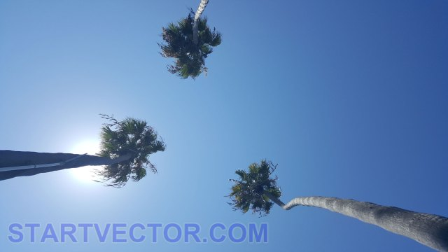 palms background