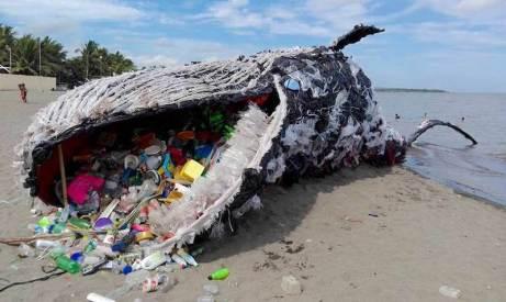 giant-dead-whale