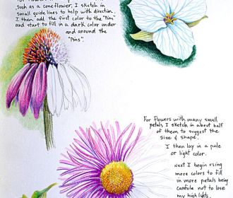 Tim Marsh Nature Artist: Nature Colored Pencil Class at VAAL Lesson #3 Flowere/P…