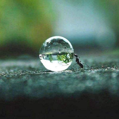 Nature Lovers' Purism Tear Drop, Water Drop Pendant, Silver, Necklace