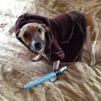 Pets in Star Wars Costumes Are the Best | StarWars.com