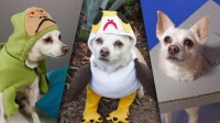 Porg and More DIY Star Wars Pet Costumes for Halloween ...
